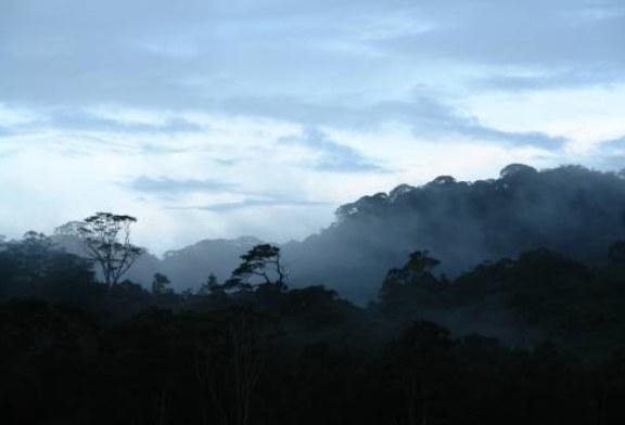 В высокогорных лесах Вьетнама нашли лягушек-эльфов