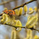 Из-за холодов в Москве сдвинулся сезон аллергии на пыльцу