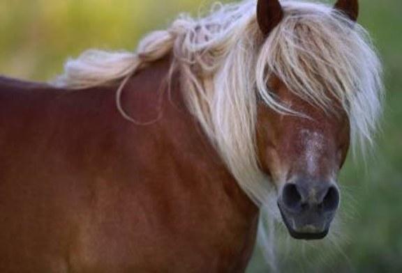 В США пони затоптали трех человек на параде