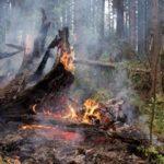 В Бурятии за сутки вдвое увеличилась площадь пожаров