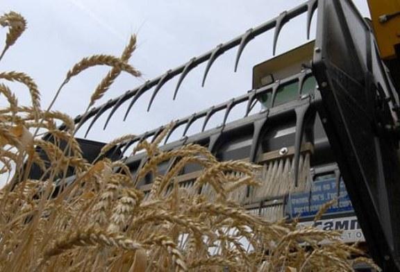 Турция отомстила России за свои помидоры ограничениями на зерно