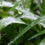 Синоптики предупредили о новых заморозках в Москве