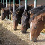 В Ленинградской области 26 лошадей погибли при пожаре в конюшне