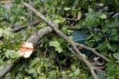 В Нижнем Тагиле во время грозы под упавшим деревом погиб мужчина
