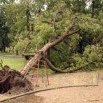СМИ назвали возможного виновника задержки СМС-рассылки об урагане в Москве