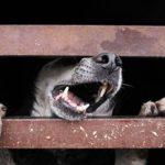 В Югре свора бродячих собак загрызла мужчину