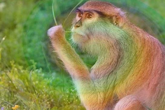 Прививка от героина испытана на обезьянах и идет к людям