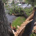 При грозе в Москве пожилую женщину придавило подпиленным деревом