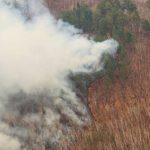 На Дальнем Востоке потушили треть всех лесных пожаров