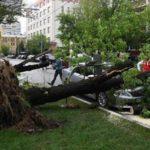 В Москве более двух тысяч человек требуют компенсацию ущерба от урагана