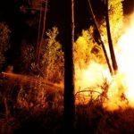 Посольство в Португалии проверяет, погибли ли россияне при пожарах