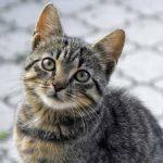 Во Франции неизвестный умертвил более 200 кошек