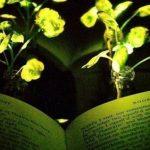 В США изобрели светящиеся цветы, способные служить фонарями