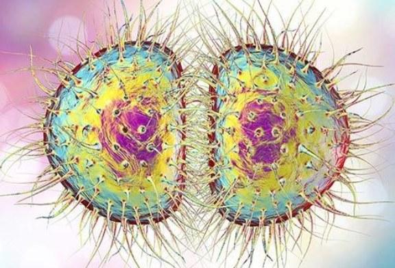 Кому нужно делать прививку от менингита, и почему ее нет в Нацкалендаре