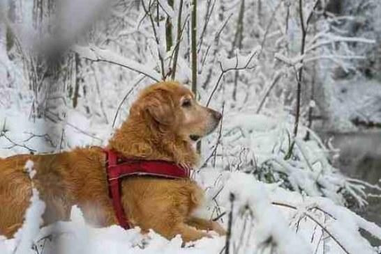 Прогулки с собакой спасают от смерти