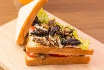 Ученые рекомендуют есть больше насекомых — они полезны и питательны