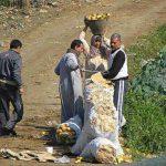 Россия останетя без египетского картофеля: новое эмбарго грозит ростом цен