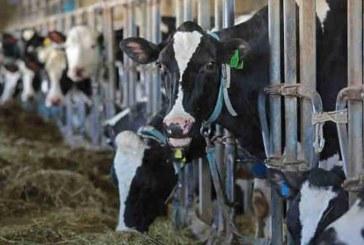 Фермеров перестанут строго наказывать за продукцию без документов