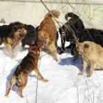 Смертельное нападение бродячих собак на юношу в Подмосковье сняла видеокамера