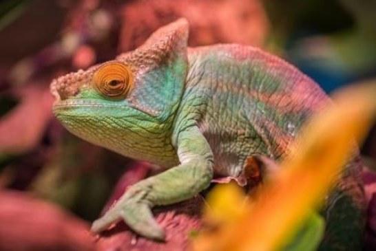 В МГУ создали материал, подобный коже хамелеона
