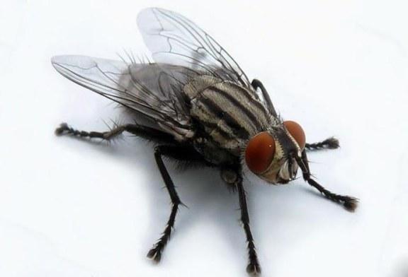 Ученные из Америки решили сравнить мозг человека и насекомого